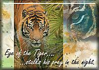 ATC-2017-53-Eye-of-the-Tiger.jpg