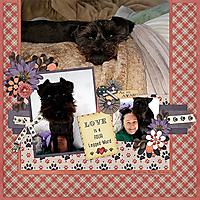 Aug-Challenge-Temp-Playful-Pups-Loucee-2.jpg