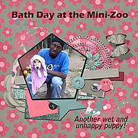 Bath-Day-at-the-Mini-Zoo.jpg
