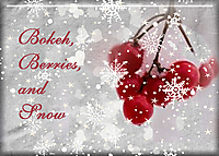 Bokeh_-Berries_-and-Snow.jpg