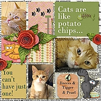 Catsarelikepotatochips_web.jpg
