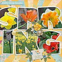 Family2014_DaffodilHill_500x500_.jpg