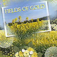 Fields_of_Gold.jpg