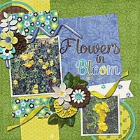 Flowers-in-Bloom---web.jpg