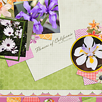 Flowers-web1.jpg