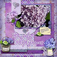 Heavenly-Hydrangeas.jpg