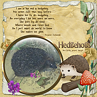 Hedgehogs_are_little_aren_t_they_.jpg