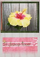 Hibiscus_FlowerWEB.jpg