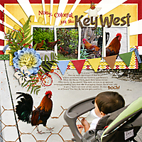 Key-West-Roosters-LRT_aug2013tempchal-copy.jpg