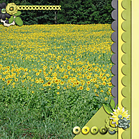 Lemon_Drop1.jpg
