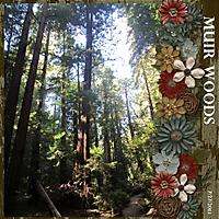 Muir_Woods_500x500_.jpg