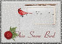 Ohio-Snow-Bird.jpg