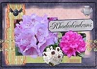 Rhodedendrons_2011.jpg