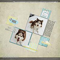 Snow-Dog-3.jpg