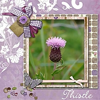 Summer-Dust-Thistle.jpg