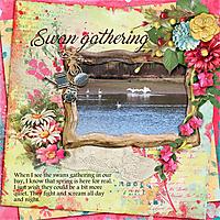 Swan-gathering.jpg