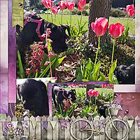 TB-Spring-in-my-Garden-7.jpg