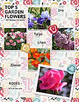 Top-5-Garden-Flowers.jpg