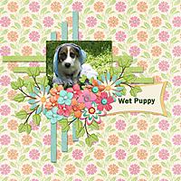 Wet-Puppy.jpg
