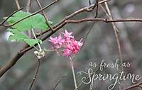 as_fresh_as_springtime.jpg