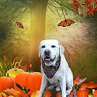 autumn-is-on-its-way_600.jpg