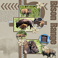 bison-rangerweb.jpg