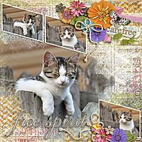 bohemian_kitty_fb.jpg
