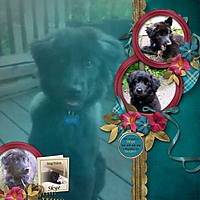 dog-tales-SSS-MC_Template600.jpg