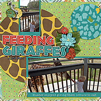 feeding-Giraffes.jpg