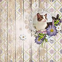 lavendar_fields_600.jpg
