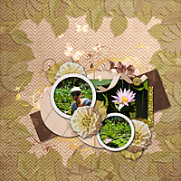 lillies16.jpg