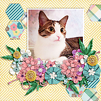 mackaflowers_fb.jpg