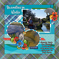 manatees-in-winter.jpg