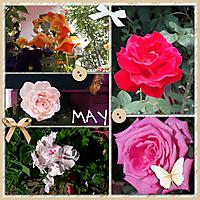 mayflowers11.jpg