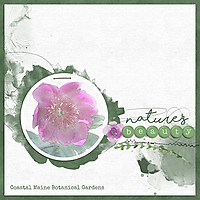 natures-beautyWEB1.jpg