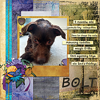 puppy-beautyweb.jpg