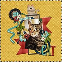 purrfect_cat_600.jpg