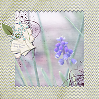 scrapbook_2013-05-19-Grape-Hyacinth.jpg