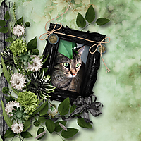 sn_boo66_cat.jpg