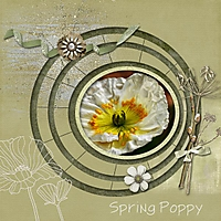 spring_poppy_gallery.jpg