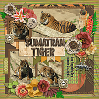 sumatran-tiger.jpg