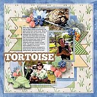 tortoise_600_x_600_.jpg
