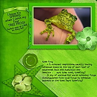 tree-frog-web.jpg