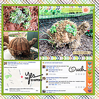 web_2017_08_August6_TurtleTopiary_SwL_MyLife34_33_right.jpg