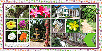 web_2017_Florida_August22_SelbyGardens4_SwL_10_17MIRTemplate.jpg