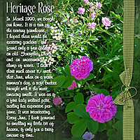 a-rose.jpg