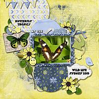 Butterfly-Tropics.jpg