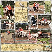 Photo-Bombed-kkEverydayStoriesCountryChic-vwABitWornTopographo3.jpg