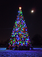 tree-031.jpg
