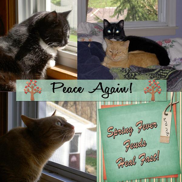 Peace Again